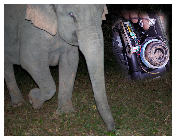 Elephant Attack in Thailand