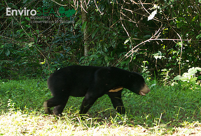 Photo of a Sun Bear