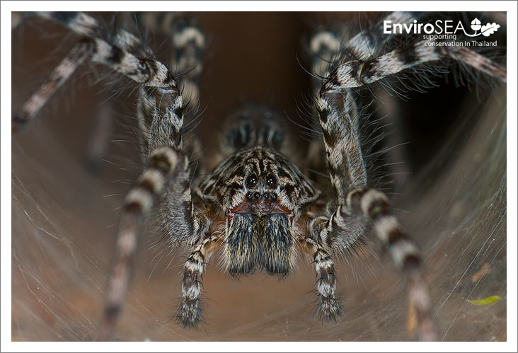 Photo of wolf spider