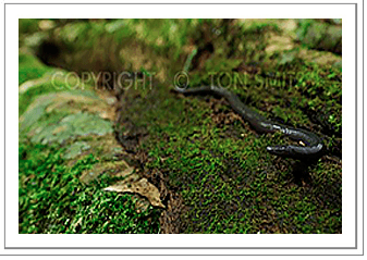Picture of the Month - New Caecilian