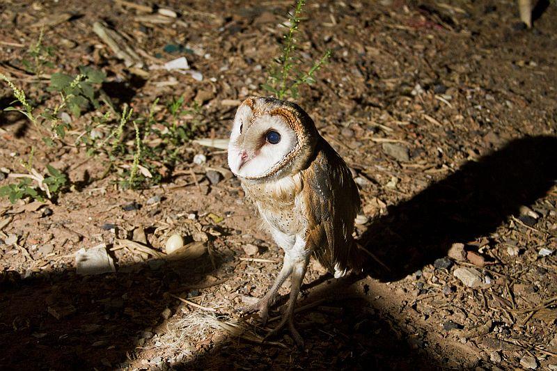 Owl-03.JPG