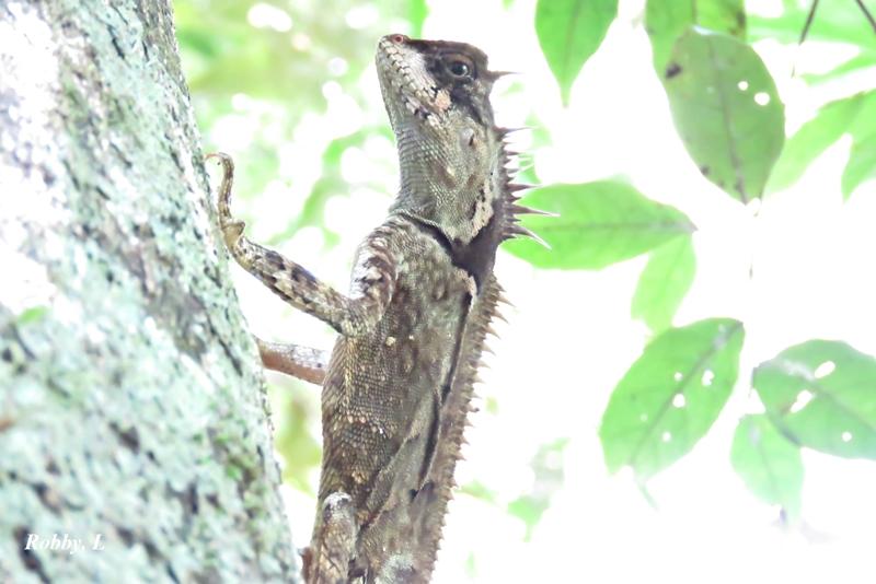 Lizard.1.JPG