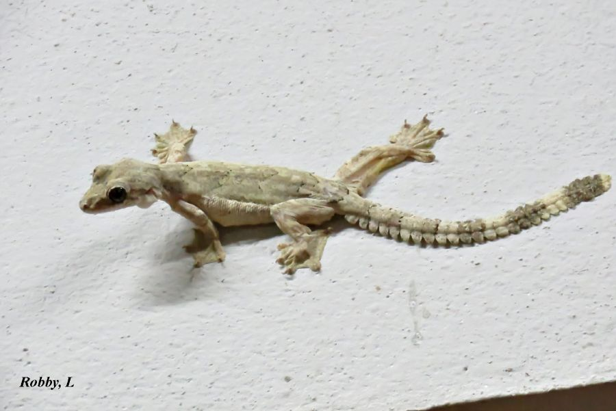 Lizard1-2.JPG
