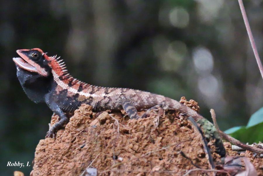 Lizard2.JPG