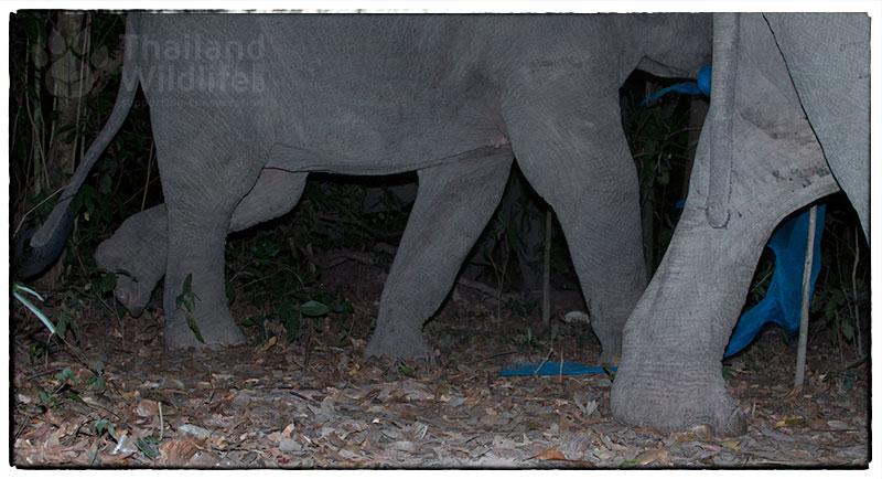 elephants-play.jpg