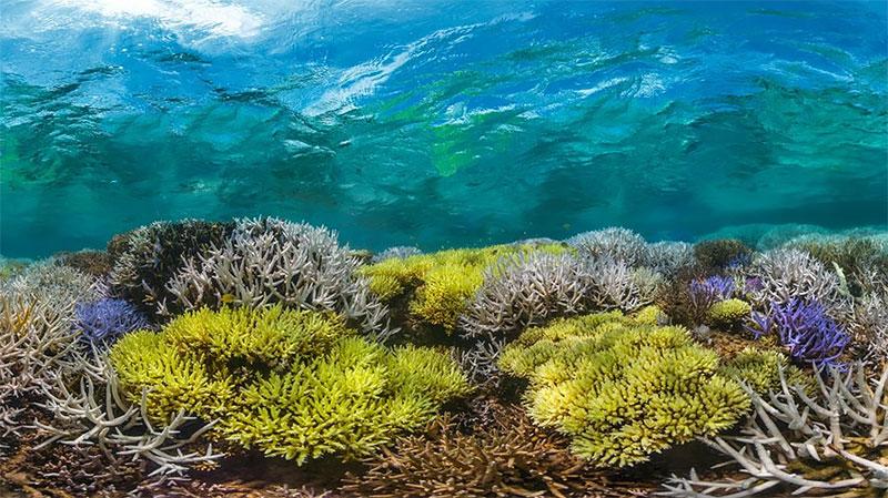 saving-coral-documentary.jpg